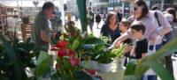 Foto portada: aspecte de la Festa de les flors, aquest diumenge. Autor: David B.