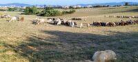 Foto portada: animals de pastura pels camps i boscos del nord de Sabadell, prop d'on es projectaria la B-40 i l'enllaç amb la Ronda Oest-Nord, el passat mes d'agost. Autor: J.d.A.