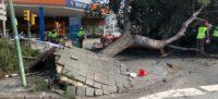 Foto portada: un arbre caigut a la carretera de Barcelona. Autor: J.Reyes.